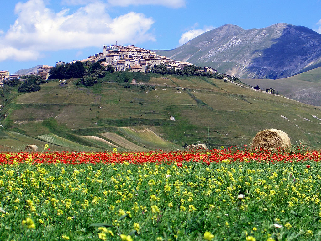 Ngất ngây sắc màu hoa Castelluccio
